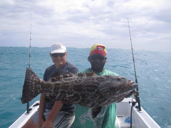 Seakarus Tours: Picture of the year , grouper