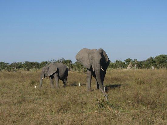 Lebala Camp - Kwando Safaris: Elephants