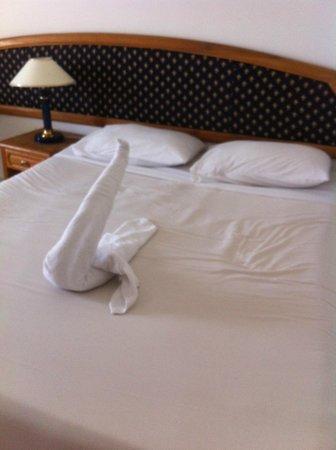 Desert Rose Resort : белый лебедь