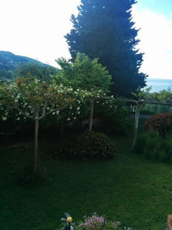 B&B Al Lizzo : Rose bush