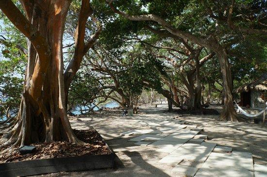 Tours en Islas del Rosario: Isla del Pirata