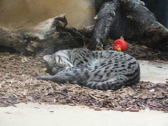 Tierpark Hellabrunn: Кошка