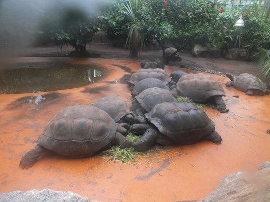 Tierpark Hellabrunn: Черепахи