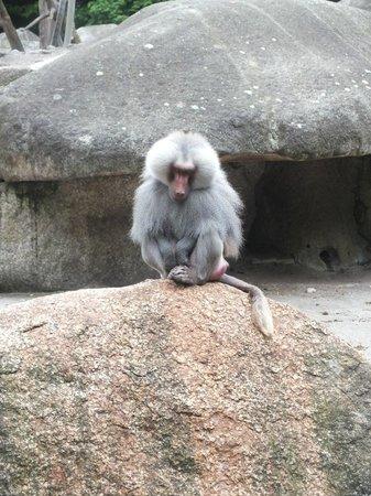 Tierpark Hellabrunn: Обезьяны