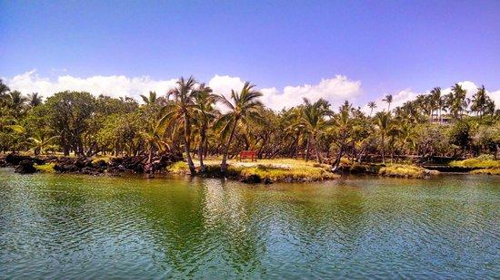 Honu Kai B&B : Fish Ponds near condos beach access