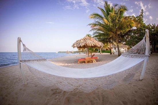 Jaguar Reef Lodge & Spa: Beach Area