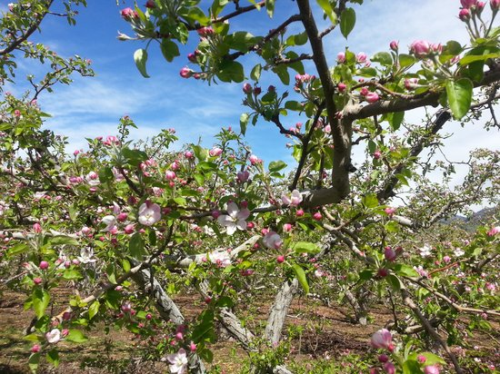 Cascade Valley Inn : Spring Blossoms
