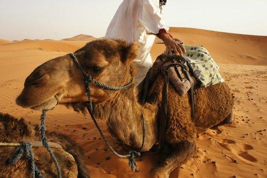 Sahara Tours 4x4 : Hassan et son dromadaire
