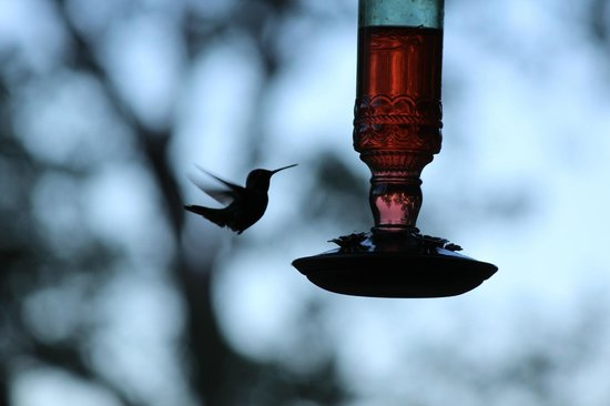 Evergreen Haus: hummingbird feeder on porch
