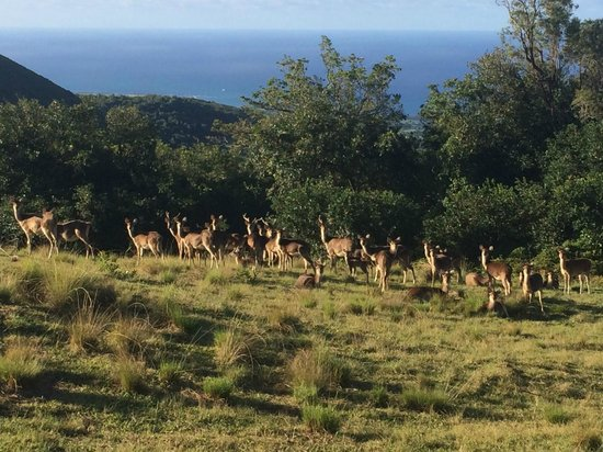 Diana Dea Lodge : biches et cerfs dans le parc