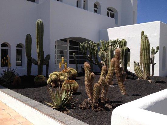 Fuerteventura Princess: Cacti in the beautiful grounds