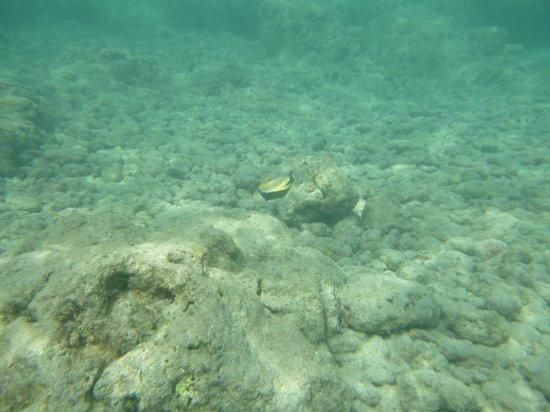 Hanauma Bay Nature Preserve: Hawaii State Fish