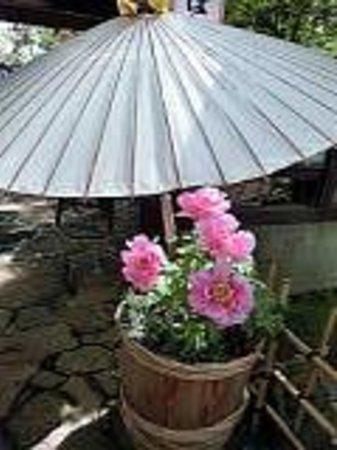 Toshogu Shrine: ぼたん