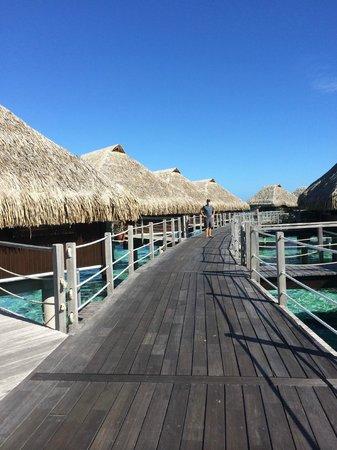 Hilton Moorea Lagoon Resort & Spa: rooms