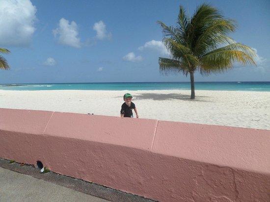 Southern Palms: Beach