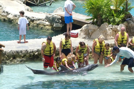 Dolphinaris Cozumel: Petting the dolphin during the Dolphin Kids encounter, May 2014
