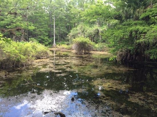 Six Mile Cypress Slough Preserve: One of the great views