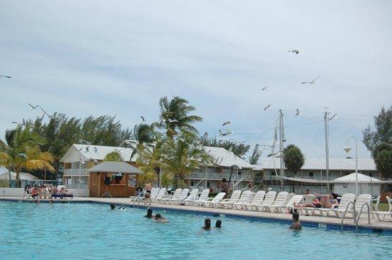 Viva Wyndham Fortuna Beach: Pool