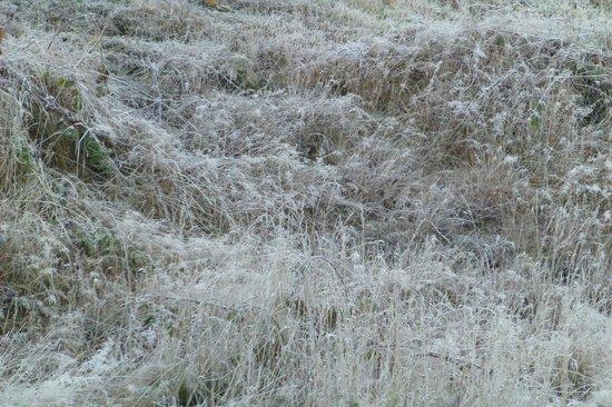 Nelson Lakes National Park: Morning frost - minus 3 degrees