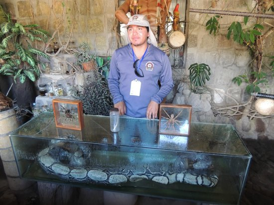 Intinan Museum: Our guide with snakes found in the Amazon