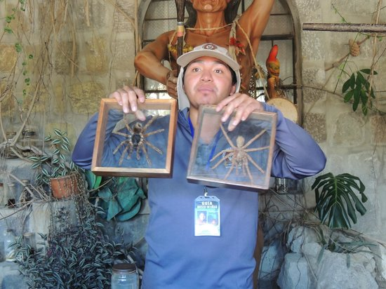 Intinan Museum: Our guide showing two common spiders of the Amazon