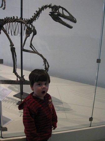 Royal Ontario Museum (ROM): DINOSAURS