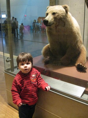 Royal Ontario Museum: ANIMAL EXHIBIT