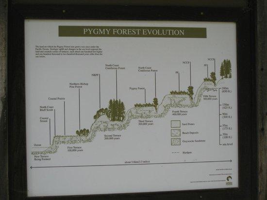 Van Damme State Park : Pygmy Forest, Van Damme SP