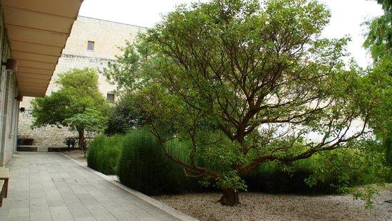 Ethnobotanical Garden: Árbol de la entrada