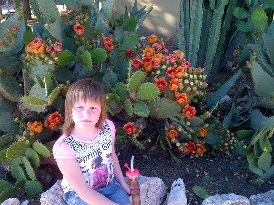 PortAventura World: Кактусы цветут