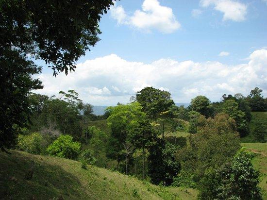 Panama Horseback Adventures: View