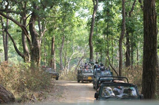 Royal Tiger Resort: The park & safari
