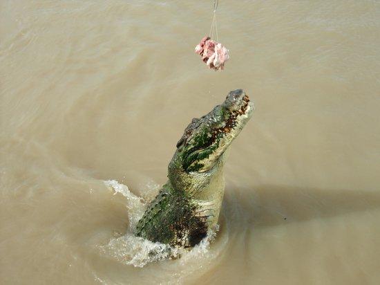 Spectacular Jumping Crocodile Cruise: The Big Male