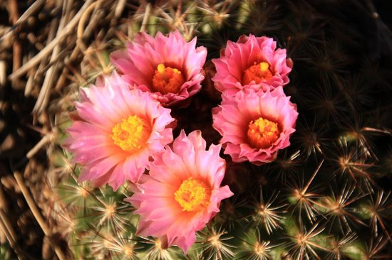 Sonnenhof Bed and Breakfast: The cacti just came into flower in the gorgeous garden while we were there