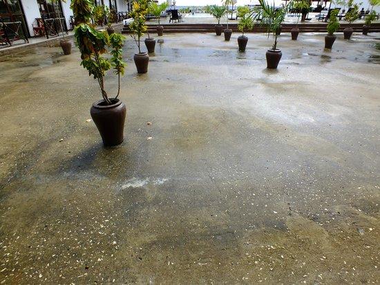 Amaan Beach Bungalows: Schrale plantjes