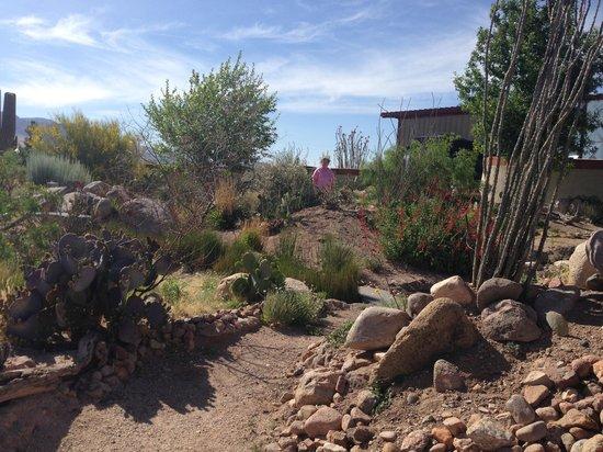 Chiricahua Desert Museum: Desert Garden