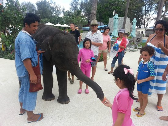 Outrigger Laguna Phuket Beach Resort: Candy the Elephant (afternoon pool area)