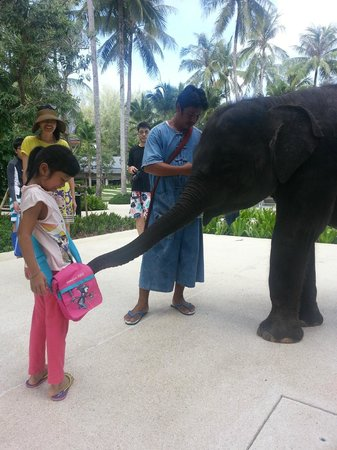 Outrigger Laguna Phuket Beach Resort: Candy the Elephant (morning)