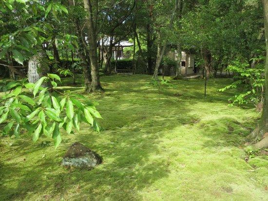 Akishinodera Temple: 秋篠寺絨毯のような苔庭