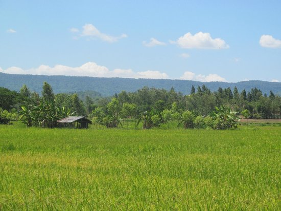 Chiang Rai Bicycle Tour: More rice fields with the backdrop of the mountains