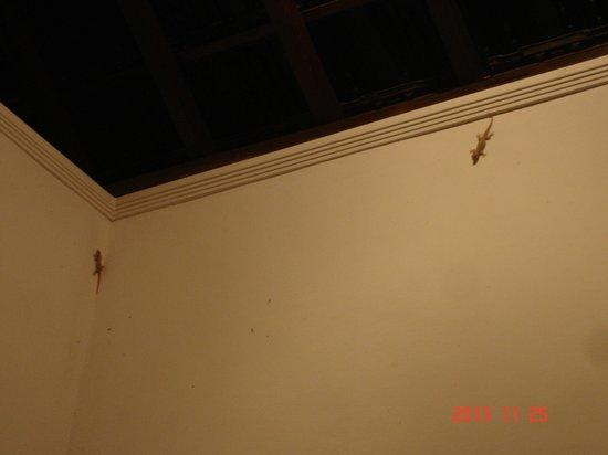 The Samara: Geckoes in fresh nature
