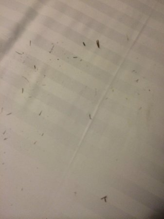 Novotel Geelong : Grass on the bed on check-in