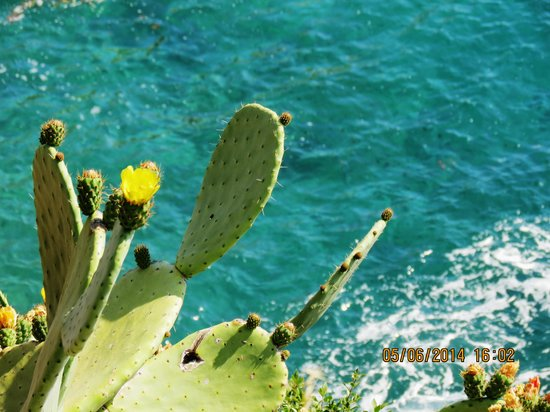 Saint Jean-Cap-Ferrat Hike: The Turquoise Med!