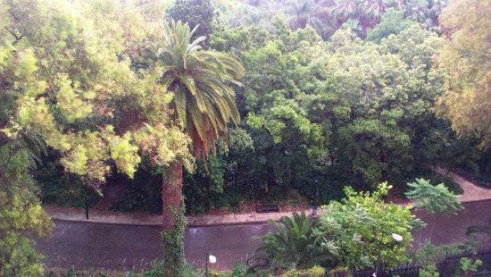 Sofitel Algiers Hamma Garden: Вид из номера в дождливый день