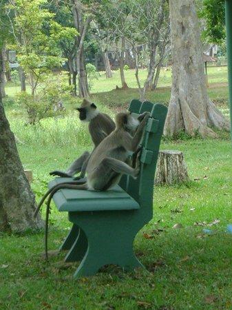 Cinnamon Lodge Habarana: Meet the wildlife!