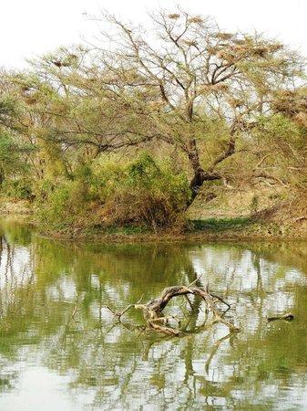 Keoladeo National Park: very green