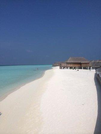 Constance Moofushi: beautiful beach