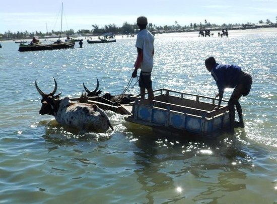 Peter Pan Anakao: Zebu-cart to the boat