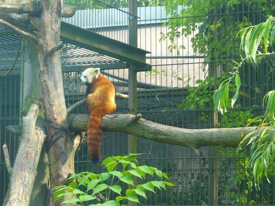 Helsinki Zoo (Korkeasaari Elaintarha): Helsinki Zoo