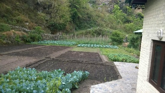 Soulitude by the Riverside: Fields of organic farming